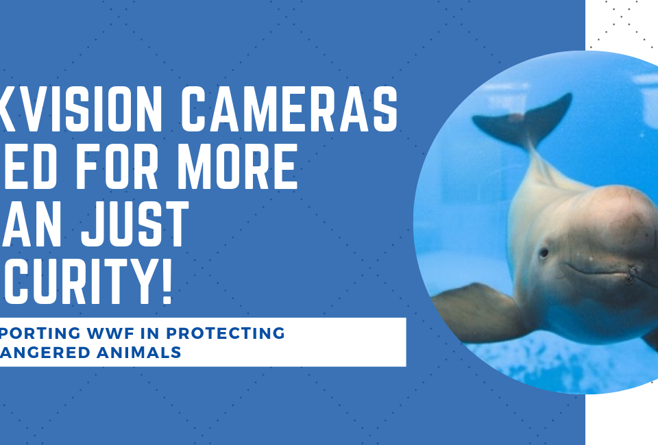 hikvision-camera-cctv-wwf-porpoise